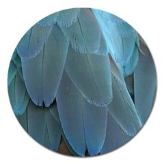 Feather Plumage Blue Parrot Magnet 5  (round)