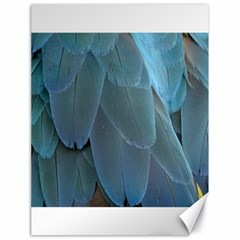 Feather Plumage Blue Parrot Canvas 18  X 24