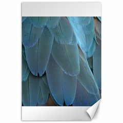 Feather Plumage Blue Parrot Canvas 24  X 36
