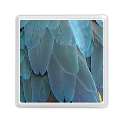 Feather Plumage Blue Parrot Memory Card Reader (square)