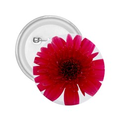 Flower Isolated Transparent Blossom 2 25  Buttons