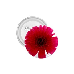 Flower Isolated Transparent Blossom 1 75  Buttons