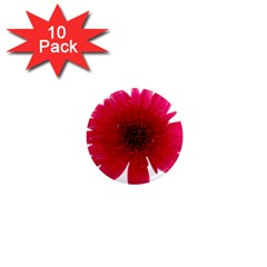 Flower Isolated Transparent Blossom 1  Mini Magnet (10 Pack)