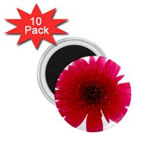 Flower Isolated Transparent Blossom 1 75  Magnets (10 Pack)  by Nexatart