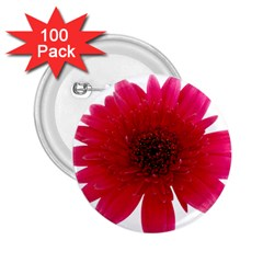 Flower Isolated Transparent Blossom 2 25  Buttons (100 Pack)