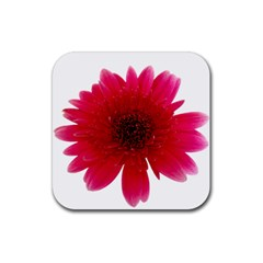 Flower Isolated Transparent Blossom Rubber Square Coaster (4 Pack)