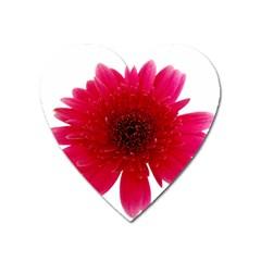 Flower Isolated Transparent Blossom Heart Magnet by Nexatart