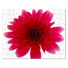 Flower Isolated Transparent Blossom Rectangular Jigsaw Puzzl by Nexatart