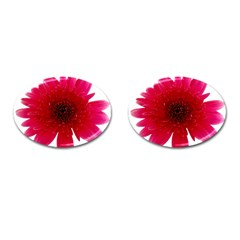 Flower Isolated Transparent Blossom Cufflinks (oval)