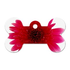 Flower Isolated Transparent Blossom Dog Tag Bone (two Sides) by Nexatart