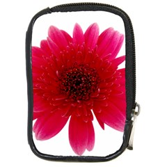 Flower Isolated Transparent Blossom Compact Camera Cases