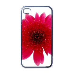 Flower Isolated Transparent Blossom Apple Iphone 4 Case (black) by Nexatart