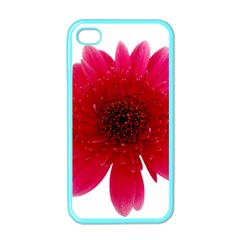 Flower Isolated Transparent Blossom Apple Iphone 4 Case (color) by Nexatart