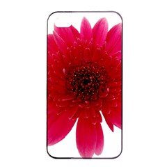 Flower Isolated Transparent Blossom Apple Iphone 4/4s Seamless Case (black) by Nexatart