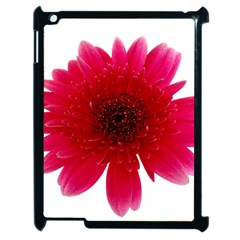 Flower Isolated Transparent Blossom Apple Ipad 2 Case (black) by Nexatart