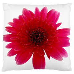 Flower Isolated Transparent Blossom Large Cushion Case (two Sides) by Nexatart