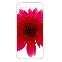 Flower Isolated Transparent Blossom Apple Iphone 5 Seamless Case (white)