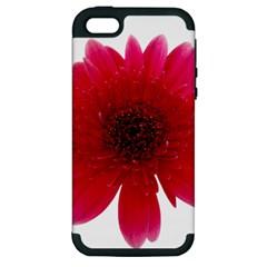 Flower Isolated Transparent Blossom Apple Iphone 5 Hardshell Case (pc+silicone) by Nexatart
