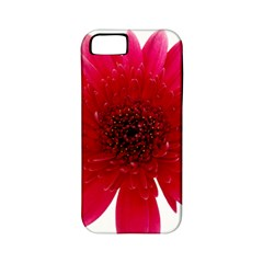 Flower Isolated Transparent Blossom Apple Iphone 5 Classic Hardshell Case (pc+silicone) by Nexatart