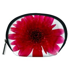 Flower Isolated Transparent Blossom Accessory Pouches (medium)  by Nexatart