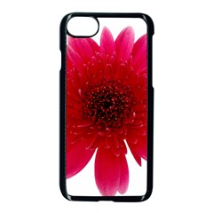 Flower Isolated Transparent Blossom Apple Iphone 7 Seamless Case (black) by Nexatart