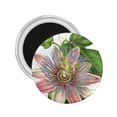 Passion Flower Flower Plant Blossom 2 25  Magnets by Nexatart