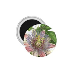 Passion Flower Flower Plant Blossom 1 75  Magnets by Nexatart
