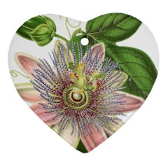 Passion Flower Flower Plant Blossom Heart Ornament (two Sides) by Nexatart