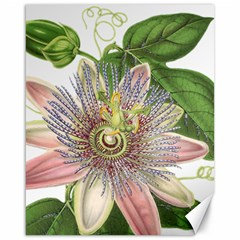 Passion Flower Flower Plant Blossom Canvas 16  X 20   by Nexatart