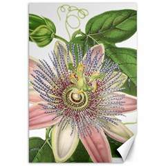 Passion Flower Flower Plant Blossom Canvas 20  X 30   by Nexatart