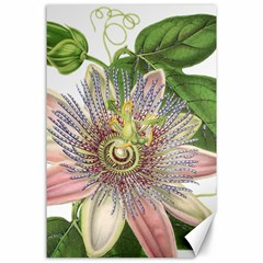 Passion Flower Flower Plant Blossom Canvas 24  X 36  by Nexatart