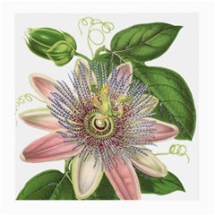 Passion Flower Flower Plant Blossom Medium Glasses Cloth (2 Side) by Nexatart