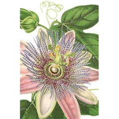 Passion Flower Flower Plant Blossom 5 5  X 8 5  Notebooks by Nexatart