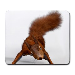 Squirrel Wild Animal Animal World Large Mousepads by Nexatart