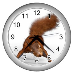 Squirrel Wild Animal Animal World Wall Clocks (silver)  by Nexatart