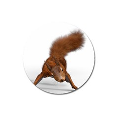 Squirrel Wild Animal Animal World Magnet 3  (round) by Nexatart