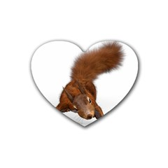 Squirrel Wild Animal Animal World Heart Coaster (4 Pack)  by Nexatart