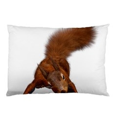 Squirrel Wild Animal Animal World Pillow Case by Nexatart