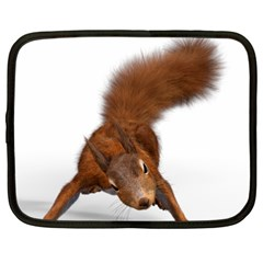 Squirrel Wild Animal Animal World Netbook Case (xxl)
