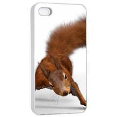 Squirrel Wild Animal Animal World Apple Iphone 4/4s Seamless Case (white)