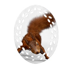 Squirrel Wild Animal Animal World Oval Filigree Ornament (two Sides) by Nexatart