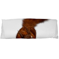 Squirrel Wild Animal Animal World Body Pillow Case (Dakimakura)