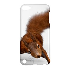 Squirrel Wild Animal Animal World Apple Ipod Touch 5 Hardshell Case by Nexatart