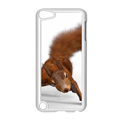 Squirrel Wild Animal Animal World Apple Ipod Touch 5 Case (white) by Nexatart