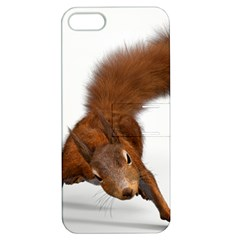 Squirrel Wild Animal Animal World Apple Iphone 5 Hardshell Case With Stand by Nexatart