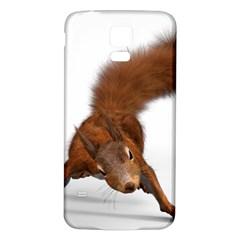 Squirrel Wild Animal Animal World Samsung Galaxy S5 Back Case (white) by Nexatart