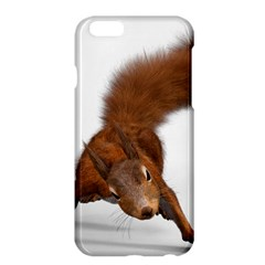Squirrel Wild Animal Animal World Apple Iphone 6 Plus/6s Plus Hardshell Case by Nexatart
