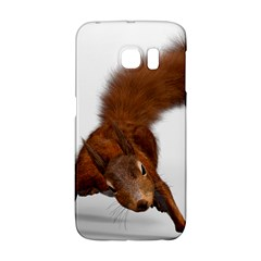 Squirrel Wild Animal Animal World Galaxy S6 Edge by Nexatart