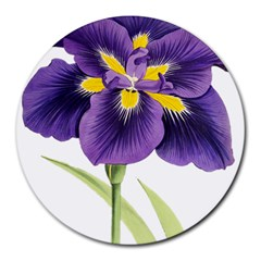 Lily Flower Plant Blossom Bloom Round Mousepads