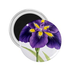 Lily Flower Plant Blossom Bloom 2 25  Magnets by Nexatart